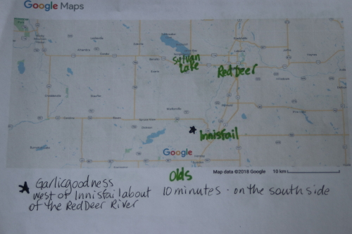 picture of a google map showing garlic goodness near innisfail alberta